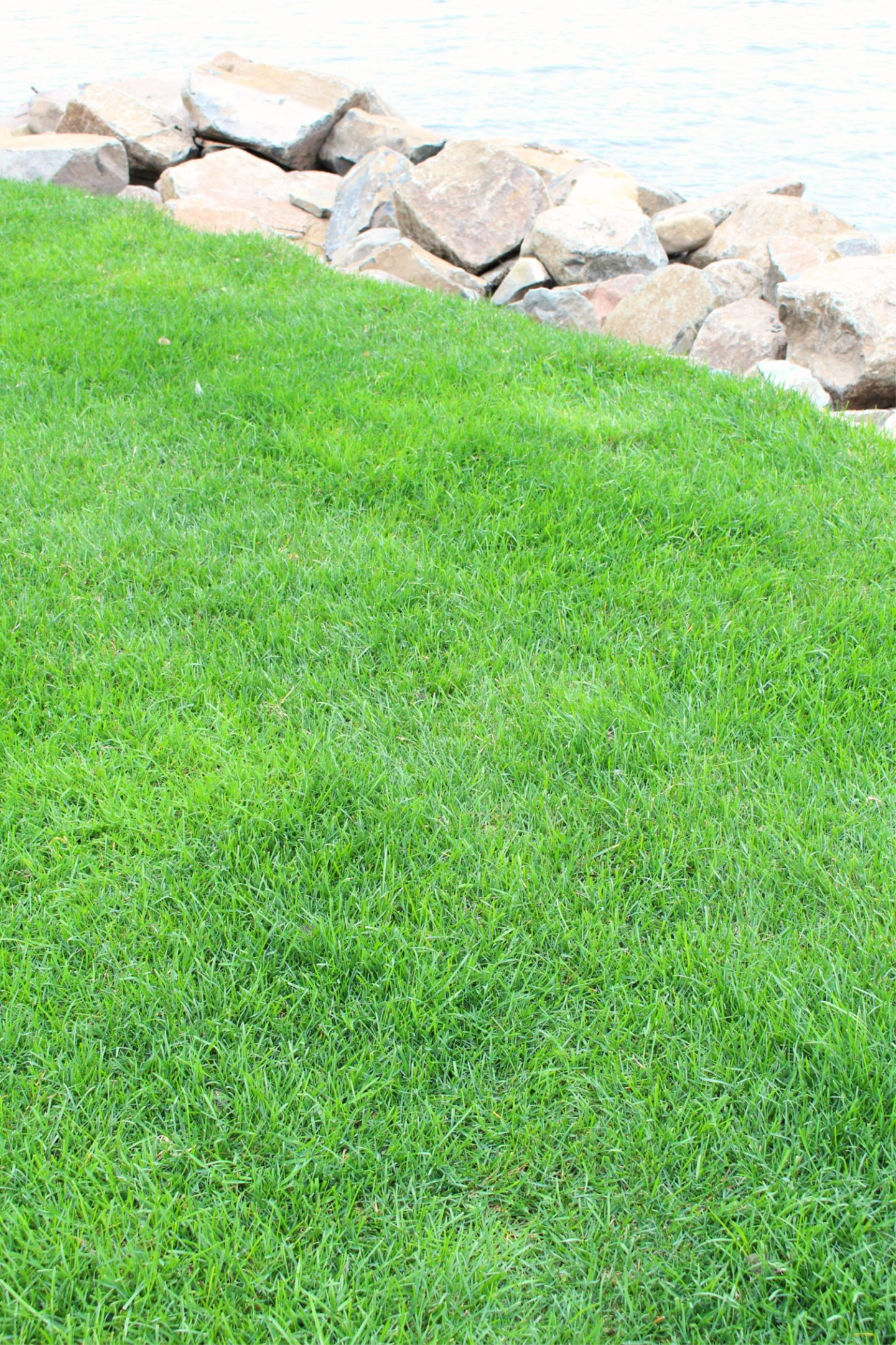 Sod vs. Grass Seed: I Tried Both!