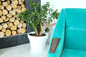 HOW TO PAINT A TERRACOTTA PLANTER