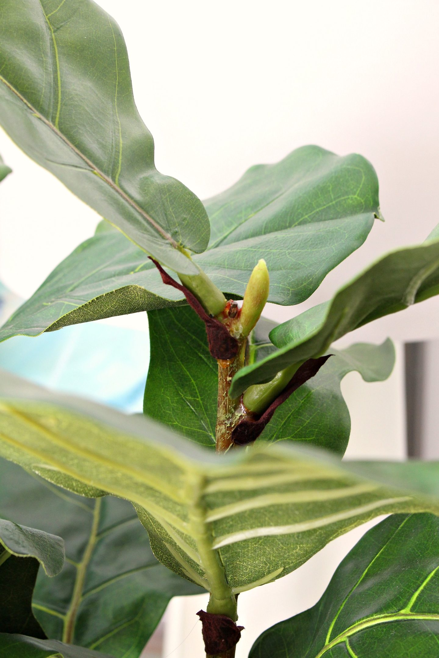 Realistic Looking Fiddle Leaf Fig Plant That's Artifical
