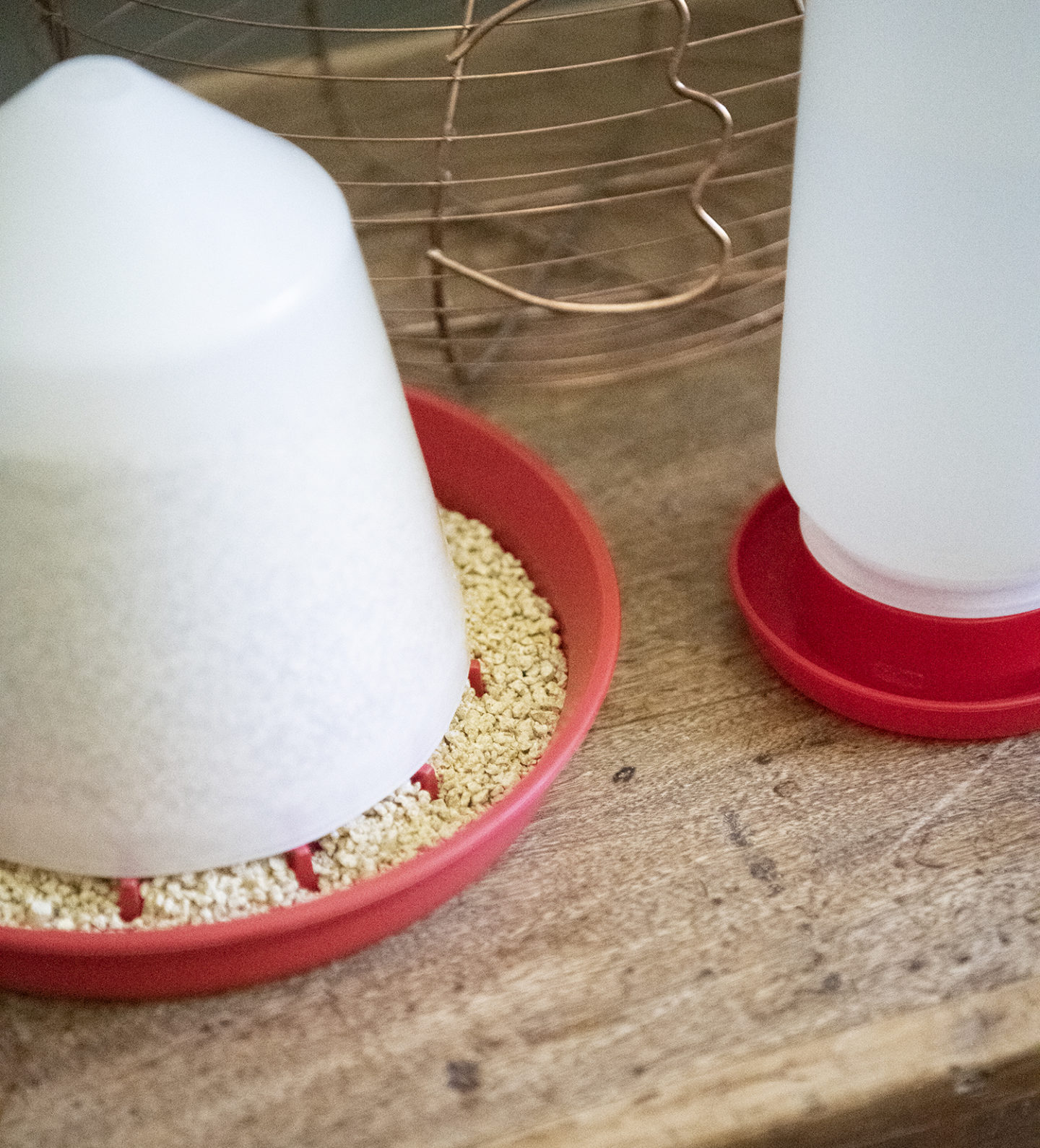 How to Set up a Brooder for Chicks: Chick Feeder and Waterer