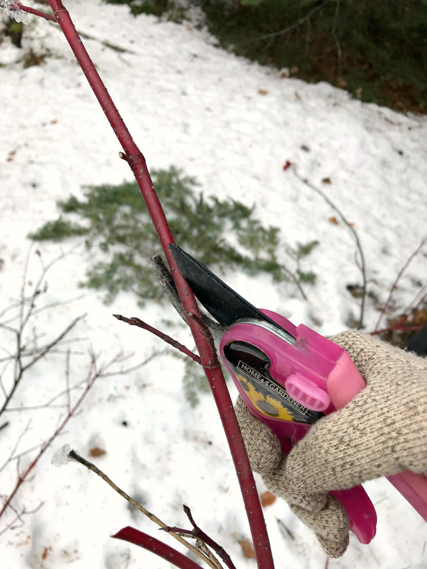 Cutting Dogwood for Winter Window Box DIY