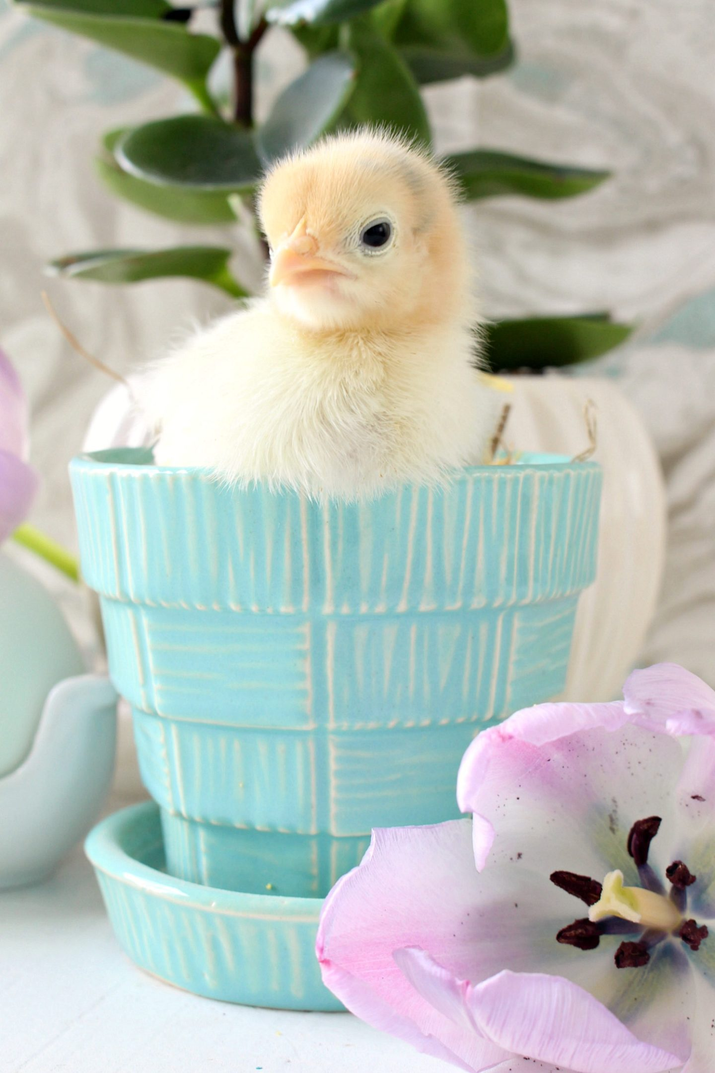 Spring Chicks in Vintage McCoy