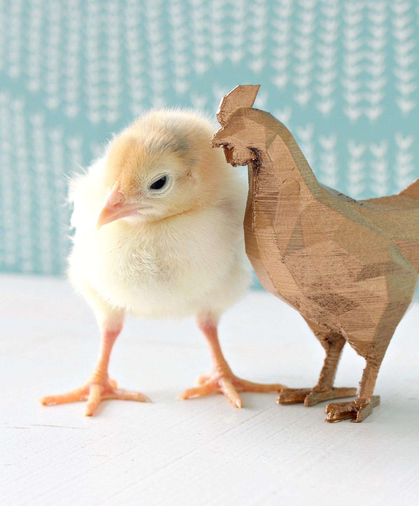 3D Printed Chicken