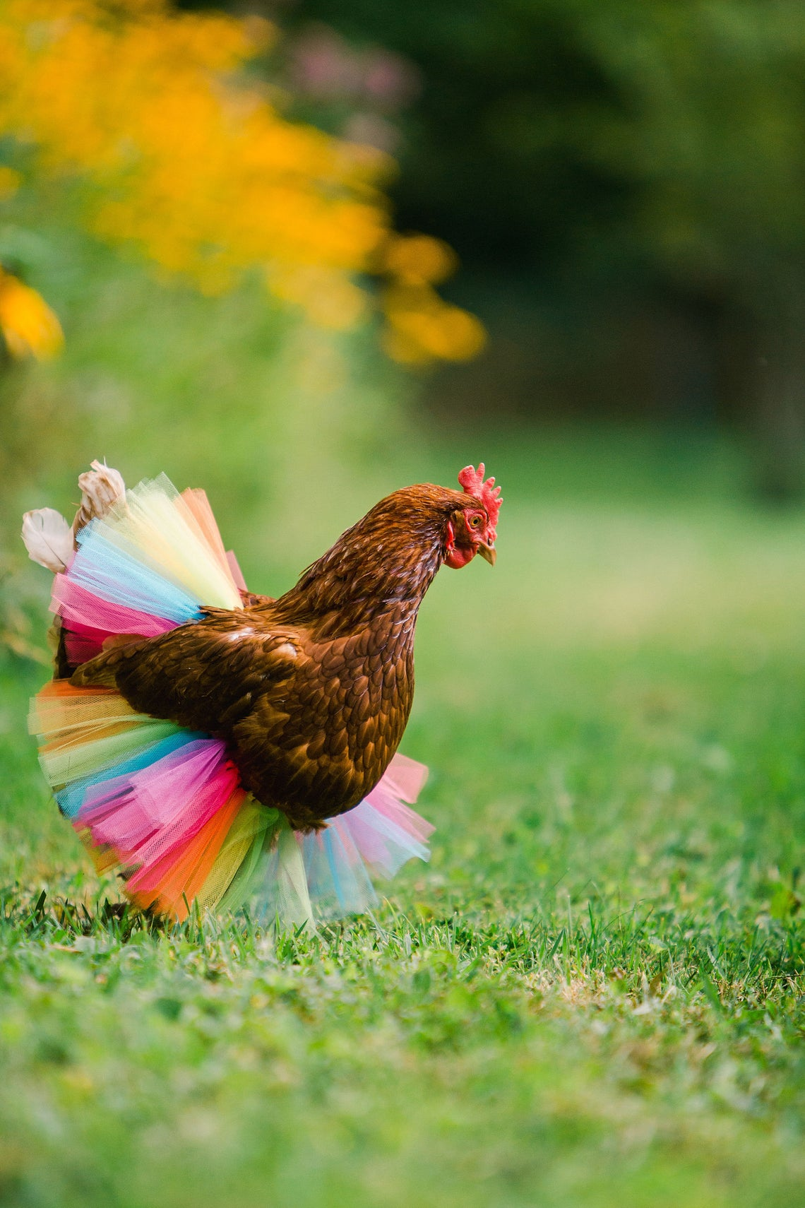 35+ Gift Ideas for Backyard Chicken Keepers 2020