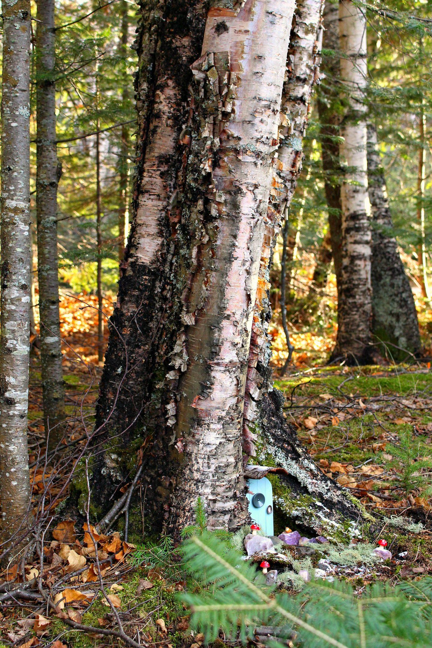 DIY Fairy Door in Tree Base