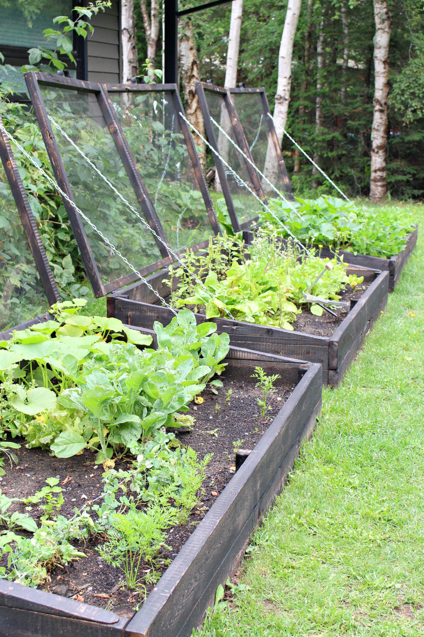 Cold Frame Garden Results