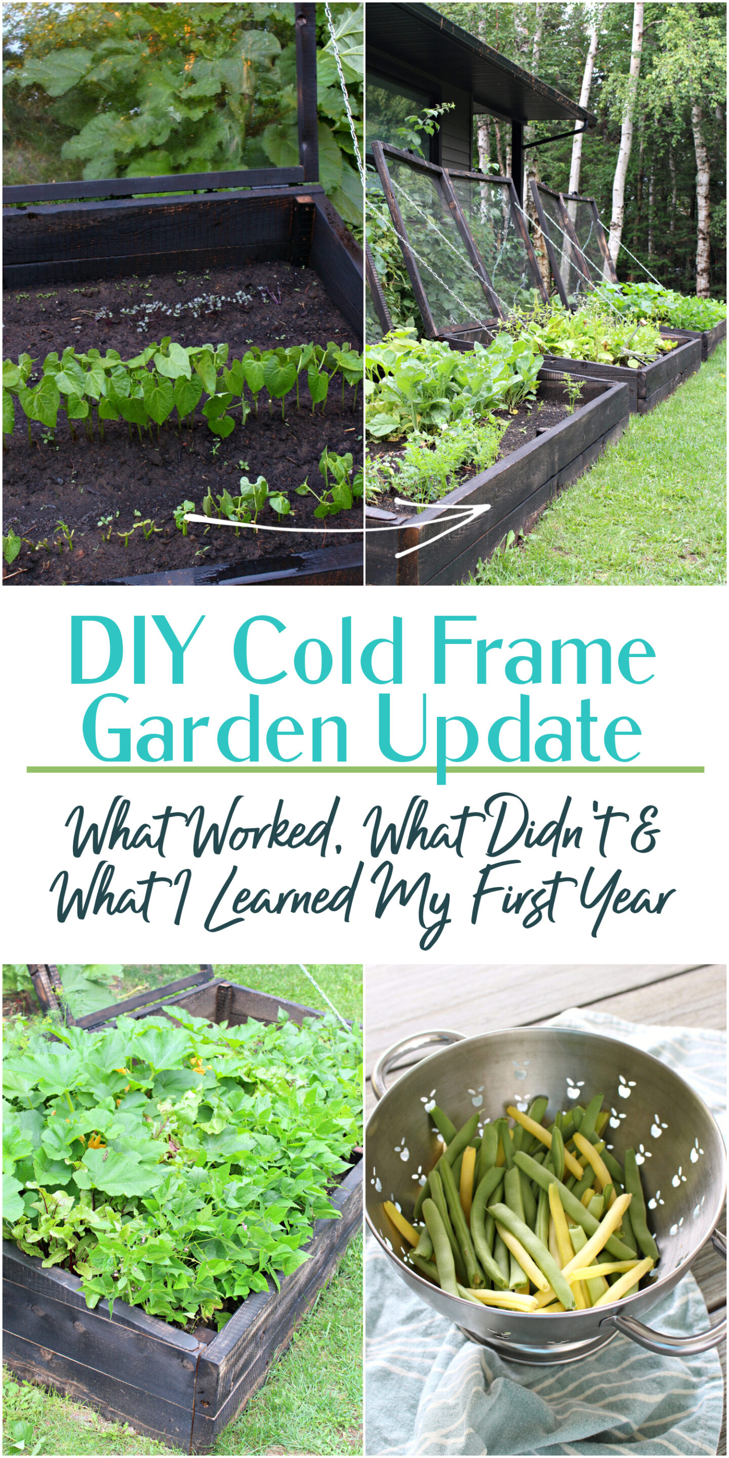 DIY Cold Frame Garden Update: What Worked, What Didn't & What I Learned